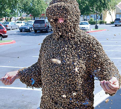 cicadas_attackB