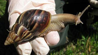 killer_snailsC